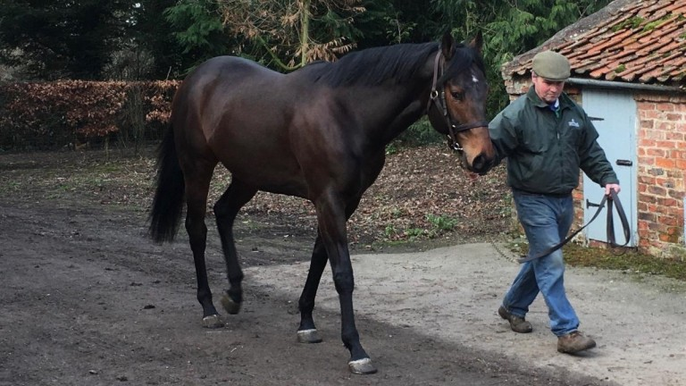 Gary Sanderson has been pleased with Wusool since his arrival earlier this year