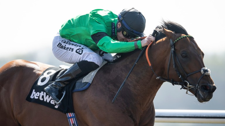 Kachy: all-weather sprint star suffered a fatal injury while in action on Saturday