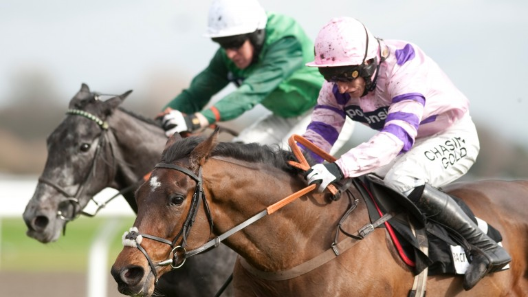 Zarkandar burst onto the scene in the 2011 Adonis Hurdle for trainer Paul Nicholls before going on to Cheltenham Festival glory the following month. Will it be more of the same with Solo on Saturday?