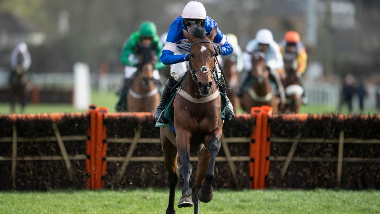 Solo: Britain's highest-rated novice after winning the Adonis Hurdle
