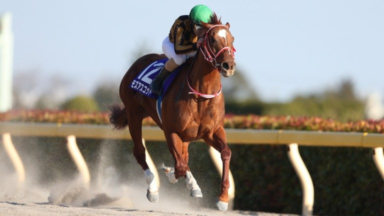 Mozu Ascot romps away with the Grade 1 February Stakes under Christophe Lemaire