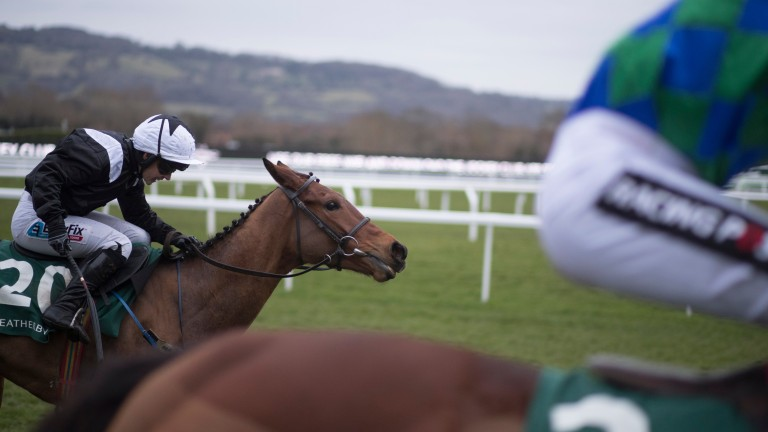 Relegate: will head to the paddocks after her retirement from racing