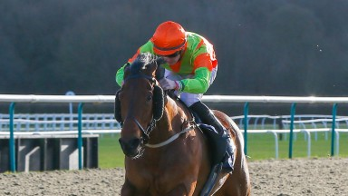 Agent Of Fortune: seven wins from ten starts since joining Gary Moore