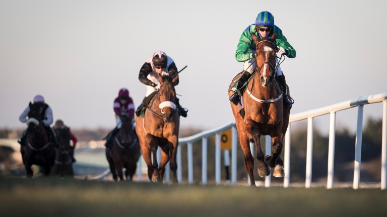 Carefully Selected: the horse everyone is talking about in the National Hunt Chase