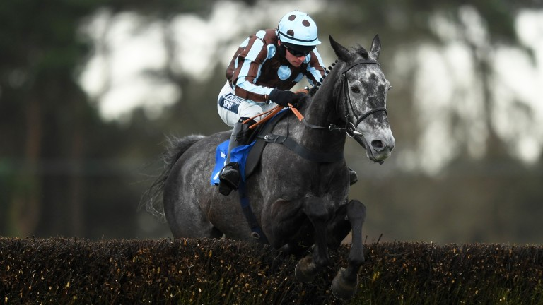 Springfield Fox: pulled up in the Welsh Grand National last time out