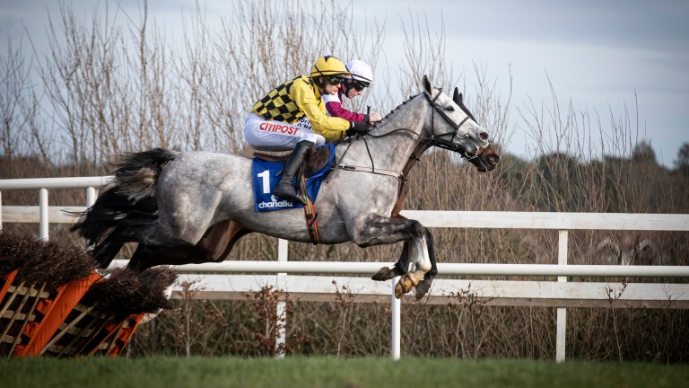 Asterion Forlonge: Sky Bet Supreme Novices' Hurdle runner can get his sire Coastal Path off to a fast start at Cheltenham