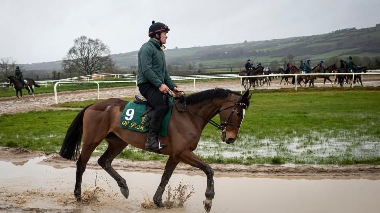 Cilaos Emery: Grade 1-winning novice could be a Champion Hurdle dark horse