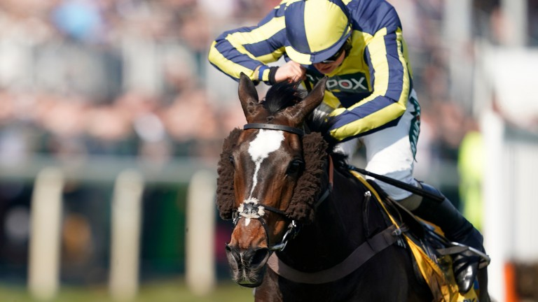 If The Cap Fits: Grade 1-winning hurdler was bought for just £30,000
