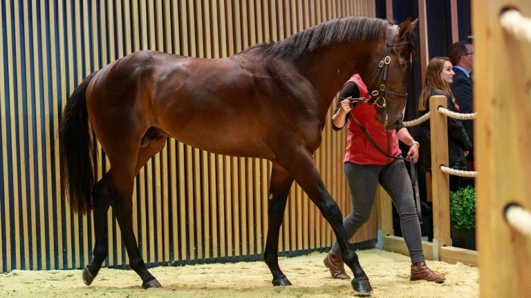 Ete Indien as a two-year-old at Arqana last May