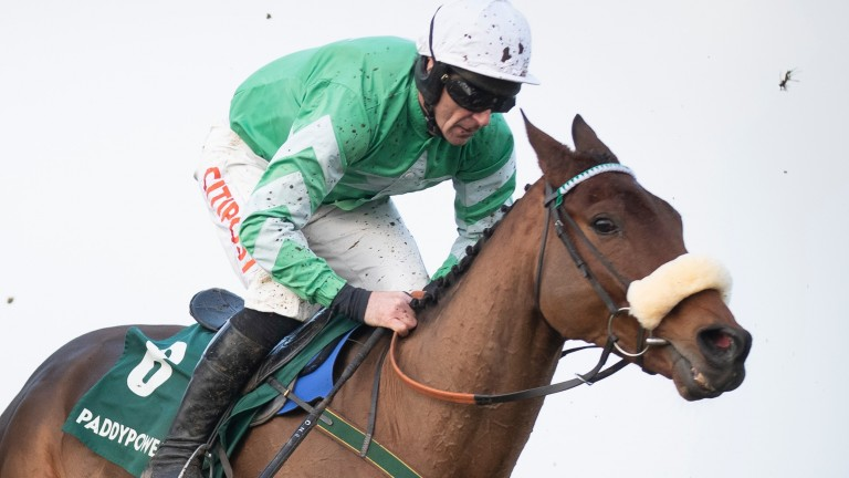 Presenting Percy: makes his first start for Gordon Elliott at Down Royal