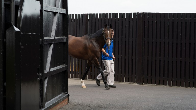 Fast Company at Dalham Hall Stud ahead of the Darley stallion parade