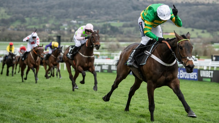 Top of the world: Epatante will return to Cheltenham next month to defend her title in the Unibet Champion Hurdle