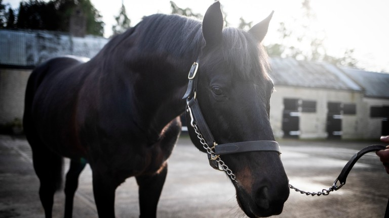 Kalanisi: the Boardsmill Stud sire supplied two winners on day one of the Cheltenham Festival