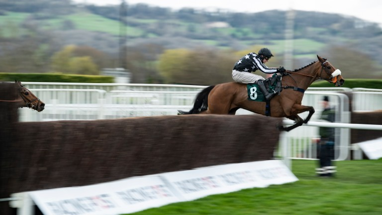 Imperial Aura flies the last in the Northern Trust Company Novices' Handicap Chase