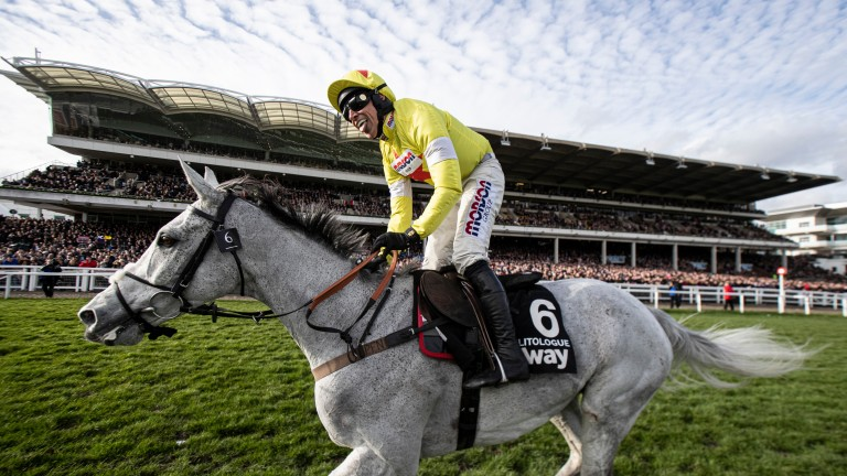 Politologue: won a far from vintage Champion Chase