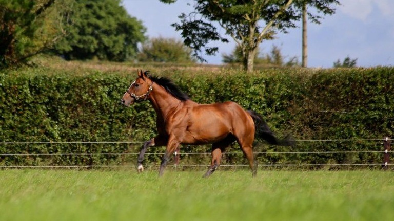 Classic winner and dual Royal Ascot scorer Leading Light bagged a notable weekend winner in the United States