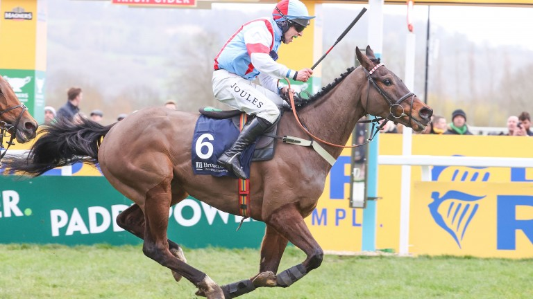 Simply The Betts: sweet success at Cheltenham last year but will miss this season's festival