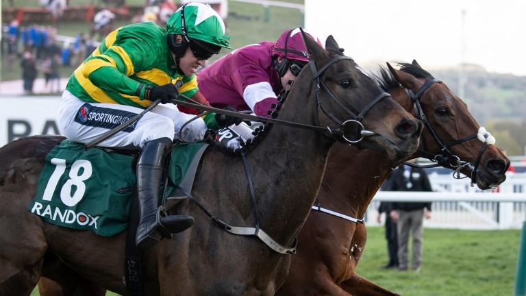 Saint Roi: considered a Champion Hurdle contender