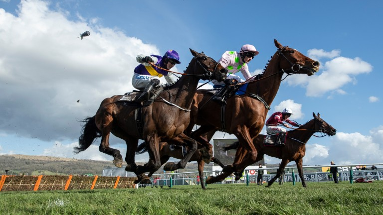 Monkfish (centre): strong favourite to maintain his unbeaten record over fences