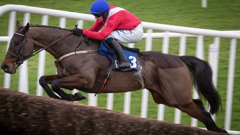 Allaho: the choice of Paul Townend