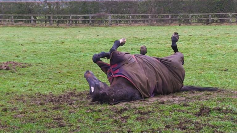 Overbury Stud stalwart Kayf Tara enjoys a roll around in the mud