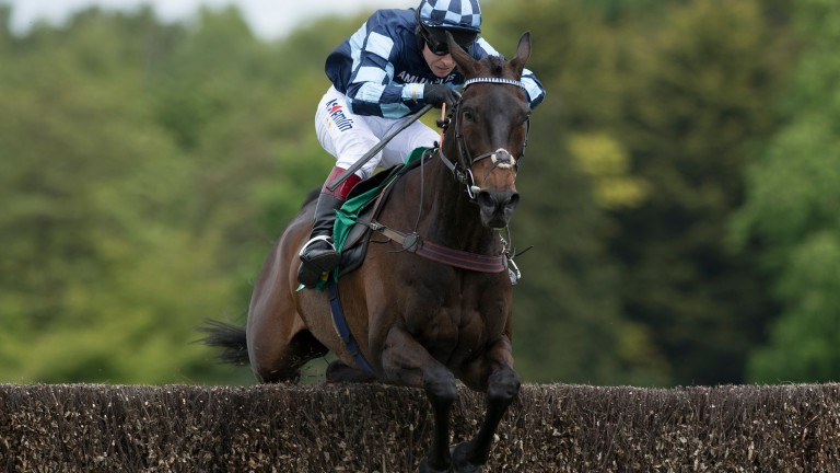 Menorah: 'one of the most exciting horses I've ever had anything to do with'