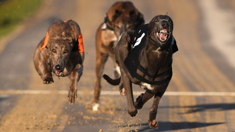 Greyhound racing has kept the show on the road during the coronavirus pandemic