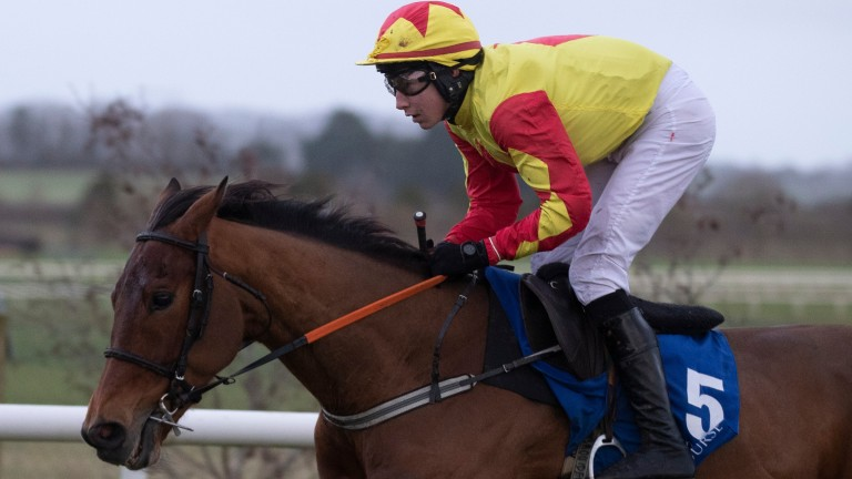 Vinnie Is Busy: has a strong chance for the Charles Byrnes team in the opener