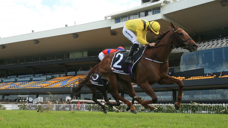 The William Haggas-trained Addeybb was in Group 1-winning action at Rosehill, Sydney on Saturday