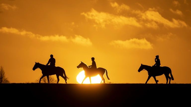 A stunning picture taken by Racing Post photographer Edward Whitaker on the Newmarket gallops on Saturday morning