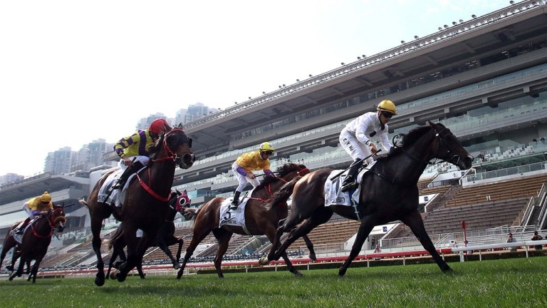 Golden Sixty: has the ability to unleash a killer burst of finishing speed