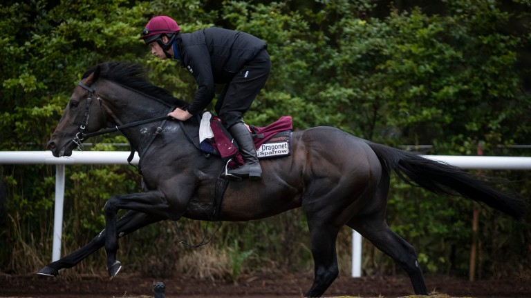 Sir Dragonet: last seen finishing fourth in the St Leger