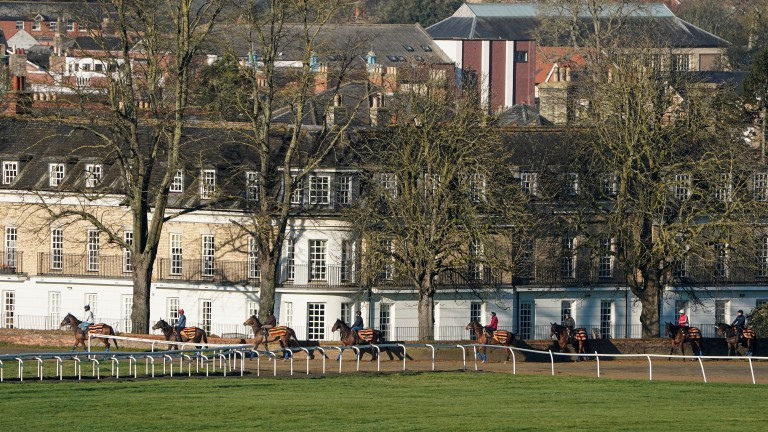 Horses making their way to Warren Hill gallops in Newmarket before the lockdown was announced