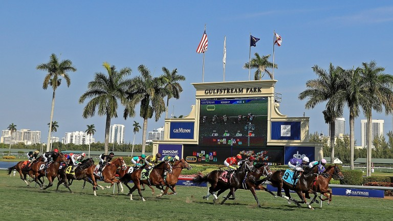 Runners stream past the stands in the first running of the $12 million Pegasus World Cup at Gulfstream in 2017
