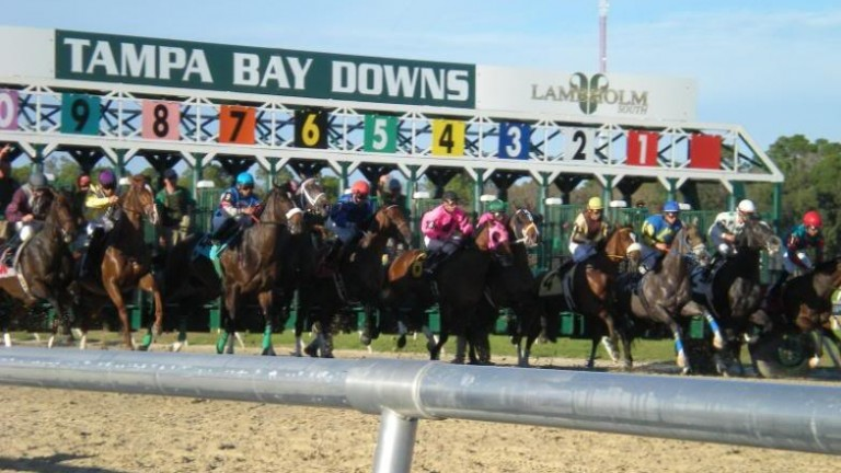 A good draw is not vital at Tampa Bay Downs, the only racecourse in west Florida