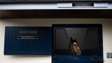 Leading sire Galileo peaks out of his stable.Coolmore Stud.Photo: Patrick McCann/Racing Post 13.06.2019