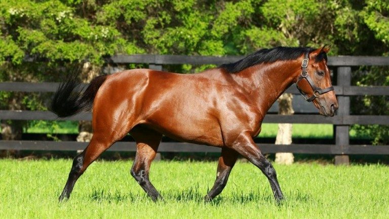 Zoffany: sire of 32 stakes winners including the exciting Albigna