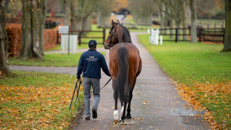 Flag Of Honour is showcased in our latest stud tour video