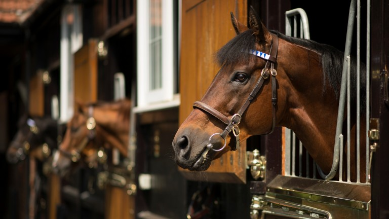 Dubawi: Darley's stalwart will again stand for £250,000