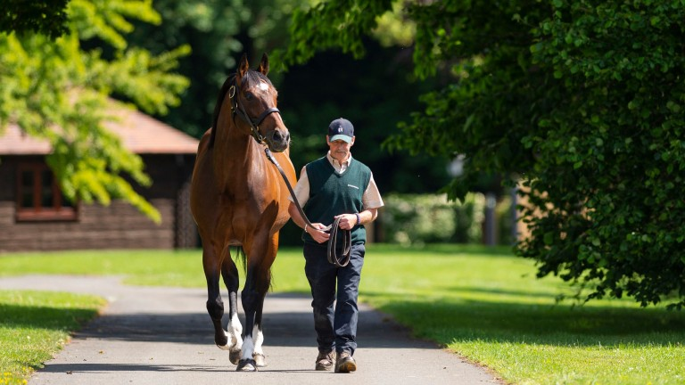 Frankel: set to welcome Pretty Pollyanna among his harem of mares
