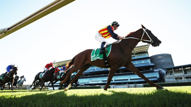 Nature Strip: hugely impressive in the TJ Smith Stakes