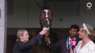 Wendy Roche fed a cup of beer to mare Nettoyer, who appeared to enjoy the alcoholic beverage