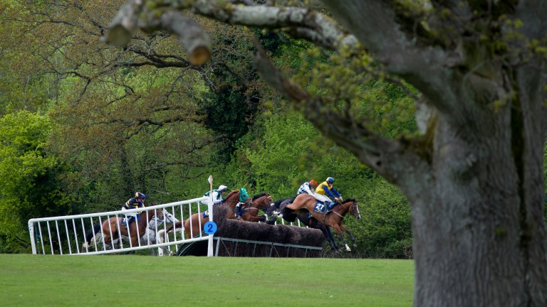 Point-to-point racing in England is set to restart on March 29