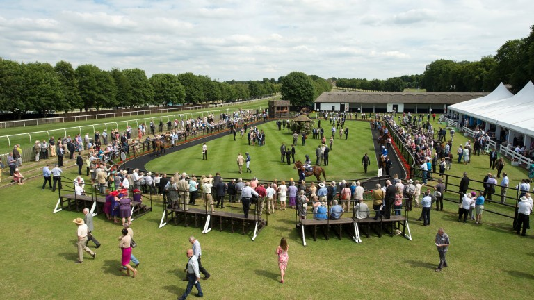 The July course parade ring: an excellent place to see the next generation of racing stars up close