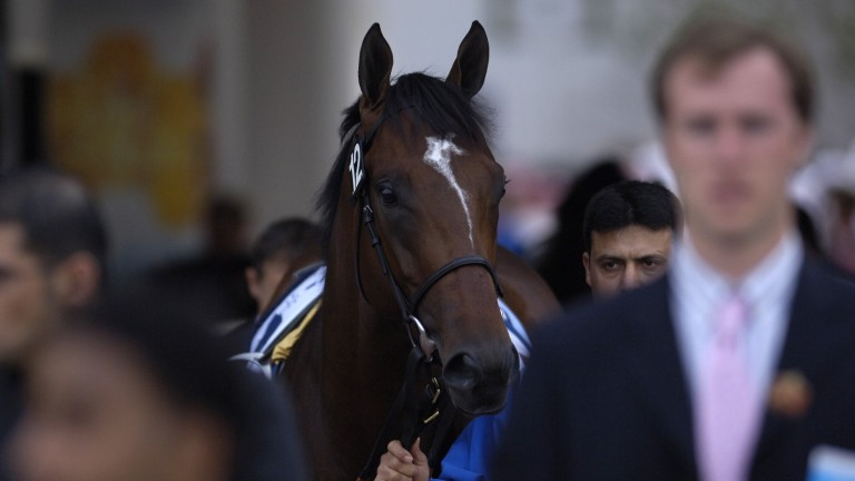 Shamardal: produced 25 individual Group 1 winners, including Pinatubo, Blue Point, Able Friend and Mukhadram