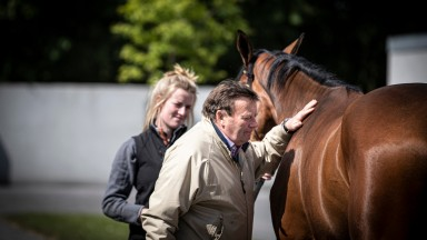 Nicky Henderson inspects a store.Goffs Land Rover sale.Photo: Patrick McCann/Racing Post 11.06.2019