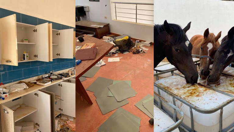 Images from the ransacked stud near Tripoli; Al Shaab staff continue to search for missing horses