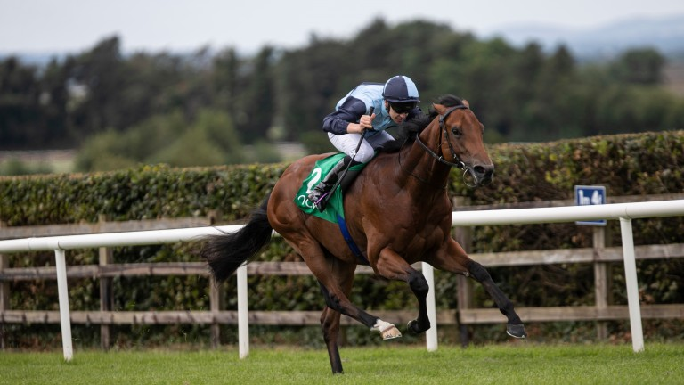 Alligator Alley: a Whatton Manor Stud graduate to look out for in 2020