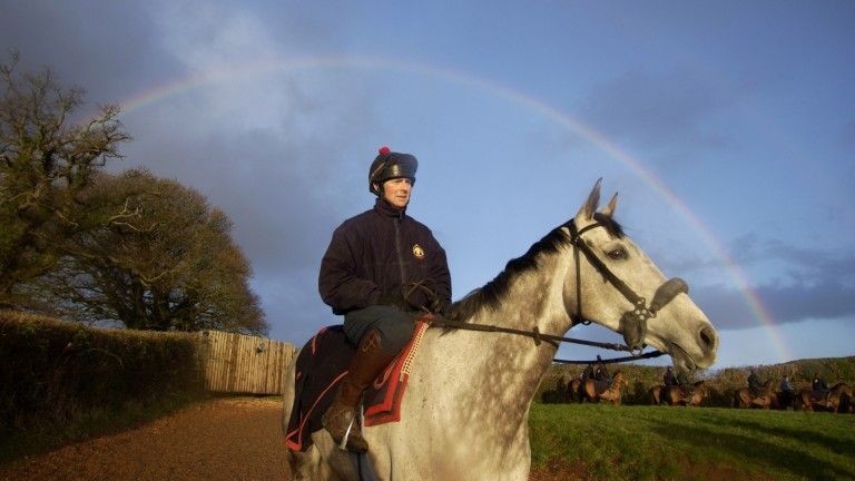 Rooster Booster: talented grey came up through the ranks and grafted his way to the top
