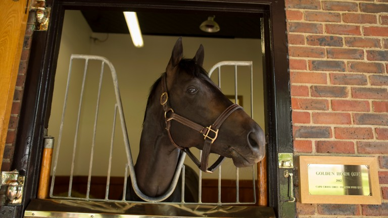 Golden Horn: could be a stallion to note this season
